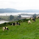 Marin dairy farm (Photo by MALT)